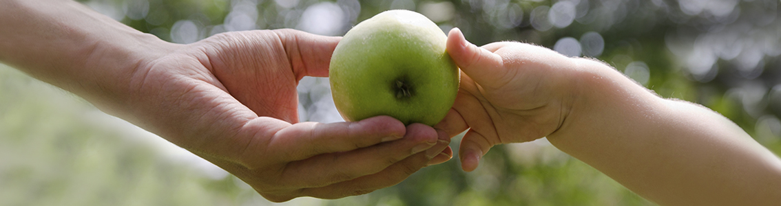 An adult hand and a child's hand both holding the same green apple